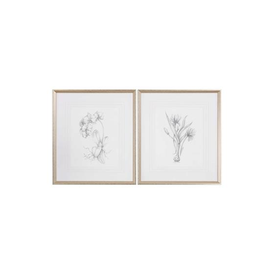 33649 Botanical Sketches S/2 by Uttermost-3