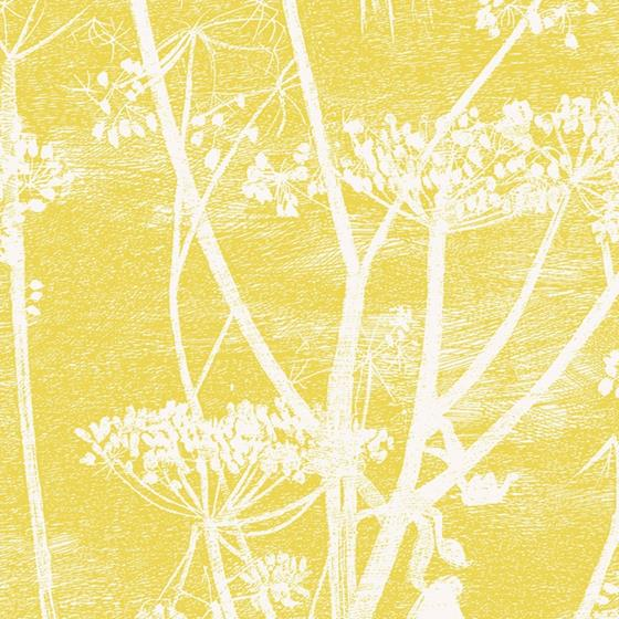 66/7051 Cow Parsley Cole and Son Wallpaper